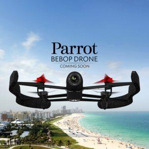 parrot_bebot